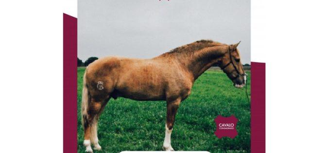 Cavalo Lusitano destaca-se em comercial de TV internacional (VÍDEO)