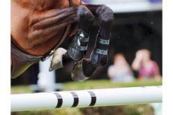 Golegã recebe Critérios de Cavalos Novos 2020