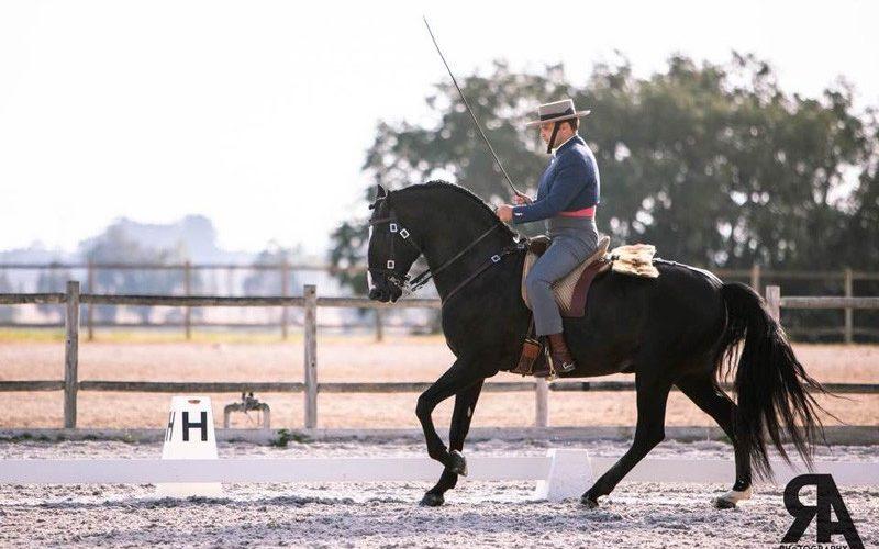 Resultados – 2ª Jornada do Troféu APSL de Equitação de Trabalho 2020