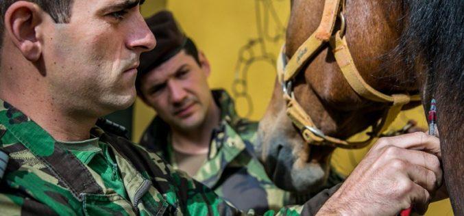 Unidade Militar de Medicina Veterinária: na vanguarda da inovação e do conhecimento