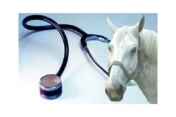 Herpes Vírus Equino: FEI Medidas e Regras a cumprir para o regresso às competições