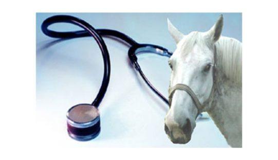 50% do IVA em despesas no veterinário vai poder ser deduzido no IRS