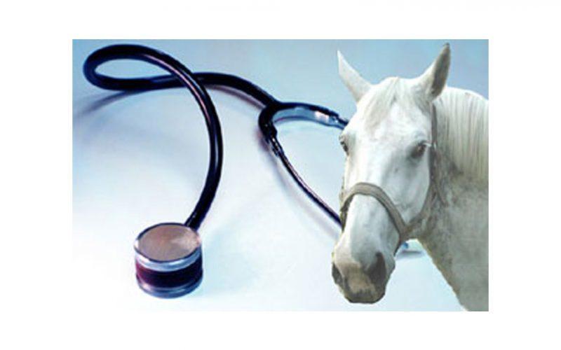 FEP: Candidaturas de Médicos Veterinários das Seleções