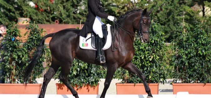 Uma dezena de cavaleiros, de Oeiras, no Campeonato Nacional e Internacional de Dressage