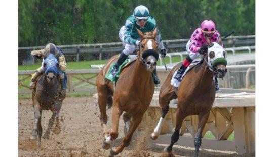 As corridas de cavalos em Portugal e as apostas possíveis nestes eventos