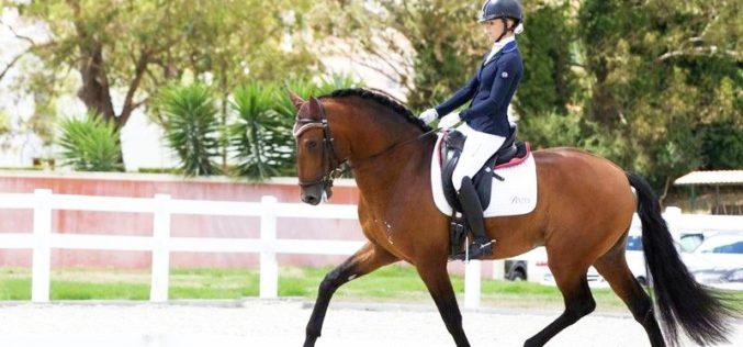 Verden: Maior evento de Cavalos Novos cancelado devido à pandemia