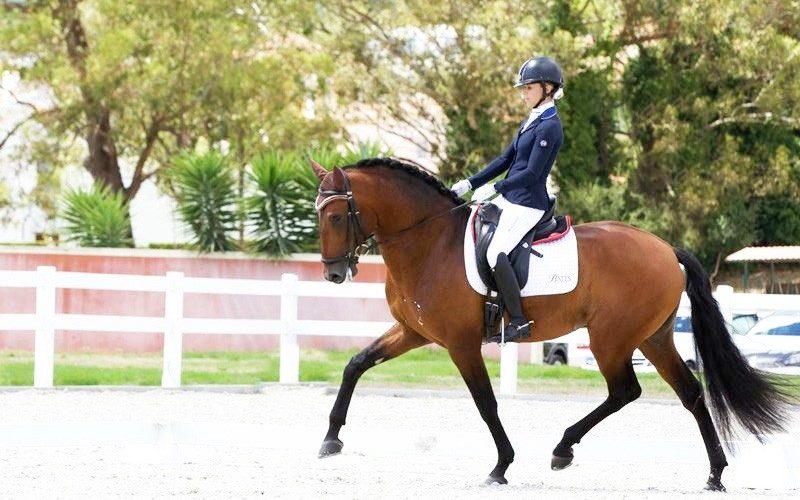 Lusitanos «Jasmim Plus» e «Irano da Estribeira» inscritos no Campeonato do Mundo de Cavalos Novos de Dressage