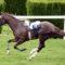 As corridas de cavalos continuam a dominar o mundo das apostas desportivas
