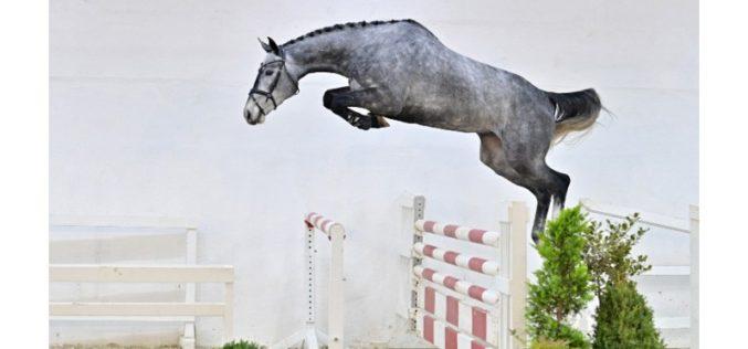 PS Auction Online realiza primeiro Leilão de Cavalos Novos de 2021 (VÍDEO)