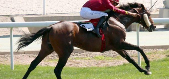 Ricardo Sousa participa em 5 corridas no domingo – Hipódromo de La Zarzuela