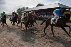 Vergonha!!! Polícia barra transporte de Cavalos de Corrida na Fronteira Espanhola (VÍDEO)