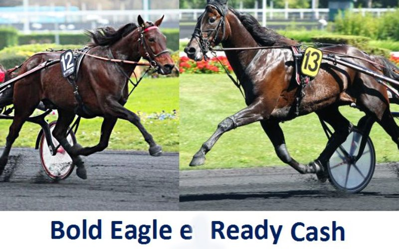 Nasceu «Light My Fire» irmão pleno de «Bold Eagle» e «Cash And Go»