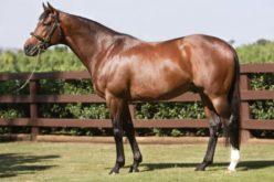 «Galileo», o cavalo que vale mais que Cristiano Ronaldo ou Messi