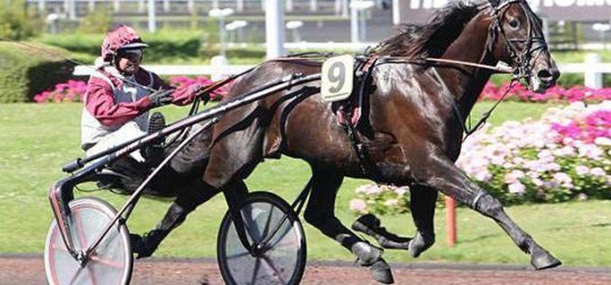 «Ready Cash» – Excelente cavalo de corridas e reprodutor