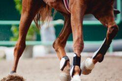 """Herpes Vírus Equino: Vírus """"altamente contagioso"""" abala mundo do desporto equestre"""
