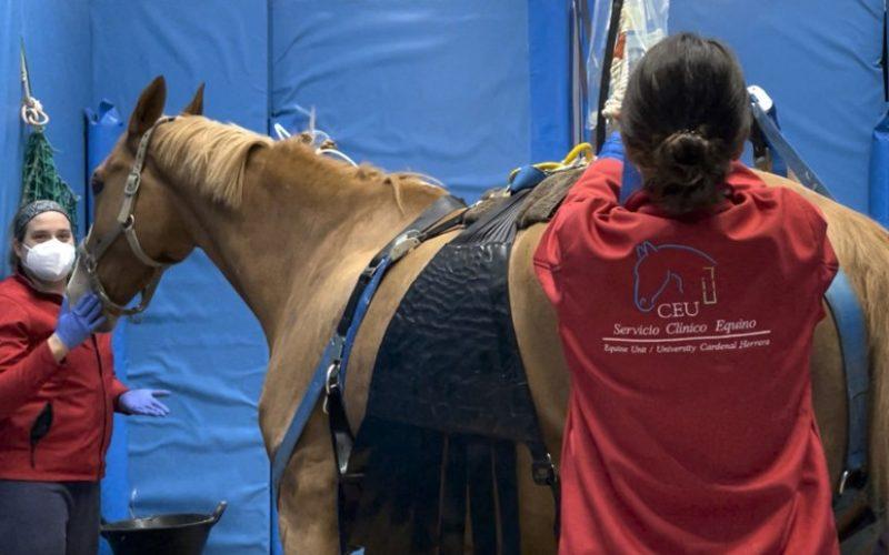 Herpes Vírus Equino: Já morreram 11 cavalos em Valencia