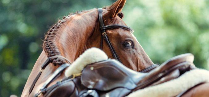 Herpes Vírus Equino: Vilamoura, Vejer, San Giovanni e Gorla Minore, vão continuar