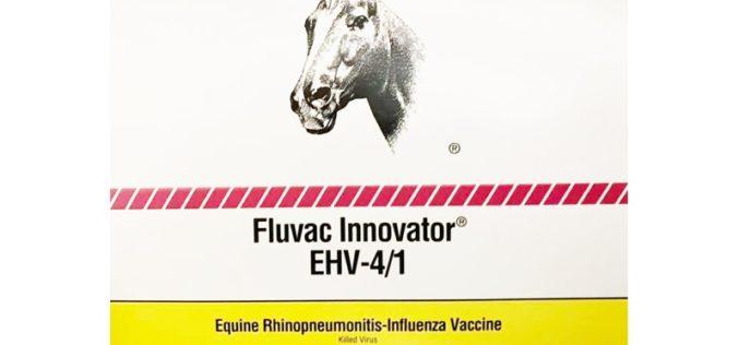 Herpes Vírus Equino: Portugal não possui stock de vacinas nacional