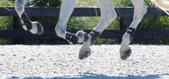 Herpes Vírus Equino: FEI suspende 20 Cavalos de Saltos portugueses