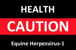 FEI: EHV-1 outbreak update & information on Doha GCT/GCL