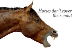 Herpes Vírus Equino: Federação Equestre Francesa suspende concursos nacionais e internacionais