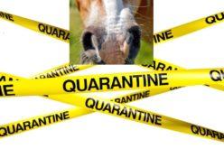 Herpes Vírus Equino: FEI começa a desbloquear cavalos na sua base de dados