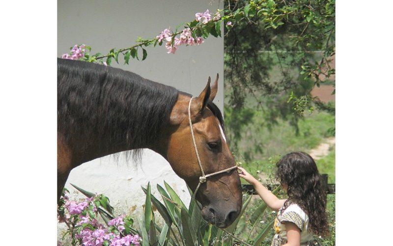 O cavalo entende melhor se o tratar como um bebé