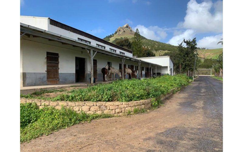 Governo Regional recupera Centro Hípico do Porto Santo