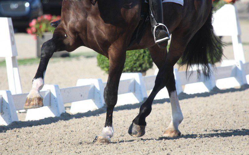 Herpes Vírus Equino: Morreu o 18º cavalo na Europa