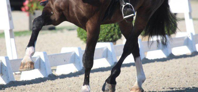 Herpes Vírus Equino: FEI suspende 2 Cavalos de Dressage portugueses