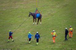 Exército suíço testa socorrer cavalos feridos usando helicópteros