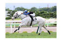 «Sodashi» primeiro equino branco a conquistar uma G1 no Japão (VÍDEO)