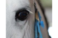 """""""Histórias de Cavalos"""" é o nome do novo programa de Manuel Luís Goucha na TVI"""