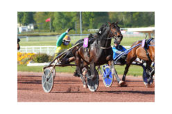 Prix de L'Atlantique : «Vivid Wise AS» brilhou no Hipódromo de Enghien (VÍDEO)