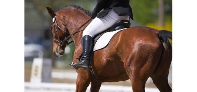 Comunicação entre bactéria no intestino e células melhora o desempenho do cavalo