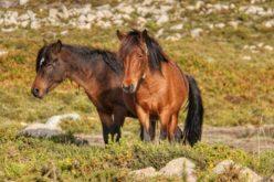 Seminário de Equinologia e Turismo Equestre na freguesia da Montaria