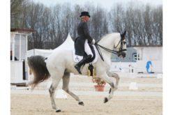 CDI3* Las Cadenas: Cavalos Lusitanos arrasam em Madrid
