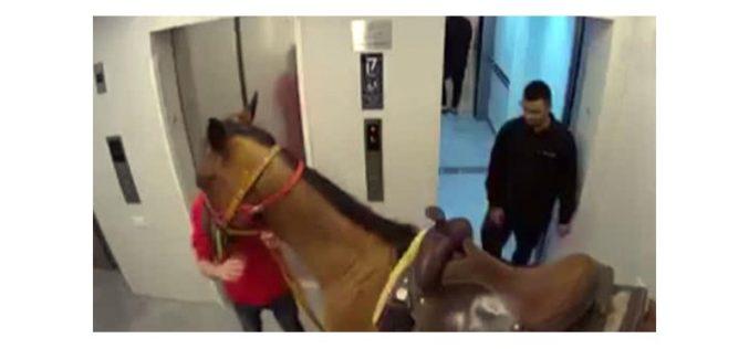 Cavalo entra em elevador de prédio de luxo em Israel (VÍDEO)