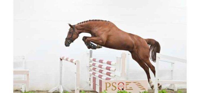 PS Auction Online realiza o 13º Leilão do Ano (VÍDEO)