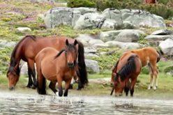 Viana do Castelo recebe Congresso Internacional de Equinologia e Turismo Equestre