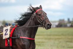 Equitação Para Principiantes
