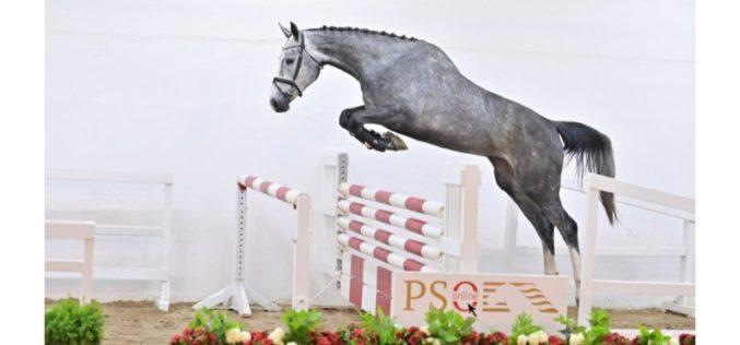 PS Online Auction: «Clair Matin PS» vendida para Portugal (VÍDEO)