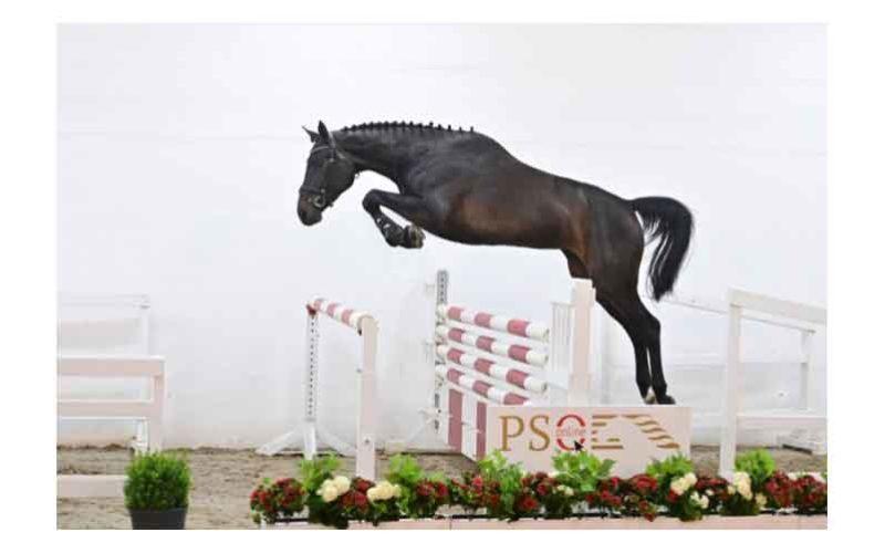 PS Auction Online: «Quaperance PS» vendida por 72.000€ (VÍDEO)