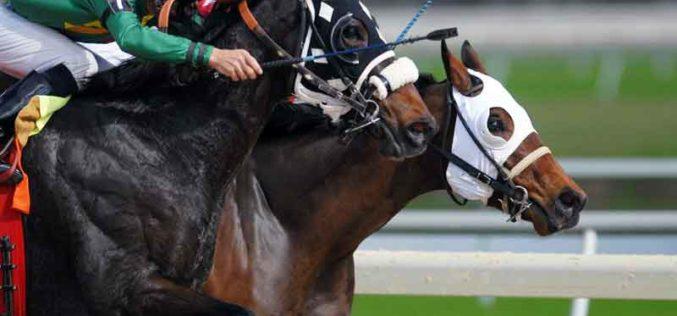 A história das apostas em cavalos, de Jaime I ao casino online