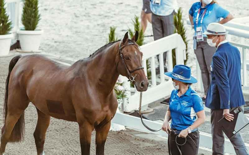 Tokyo 2020: Horse inspection for Jumping horses