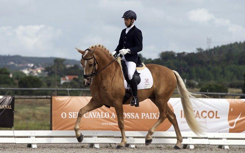 2 Cavalos Lusitanos inscritos no Campeonato do Mundo de Cavalos de Dressage 2021