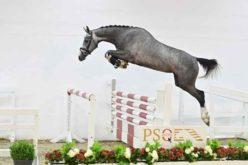 PS Auction Online: Coralie PS transacionada por 125.000€… (VÍDEO)