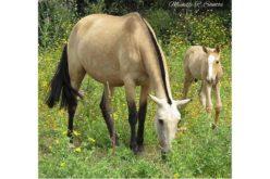 Cavalo morre envenenado com planta selvagem