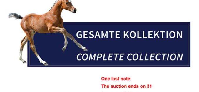 3rd Schockemöhle/Helgstrand International Online Foal Auction (VIDEOS)