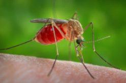 Alerta Febre do Nilo Ocidental em Coruche e Loulé